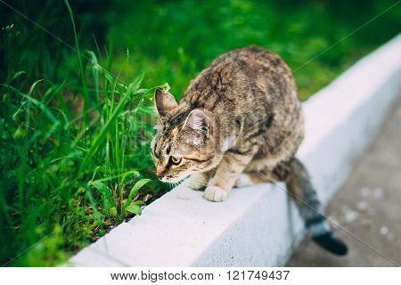 Playful Cute Funny Cat Kitten Play Outdoor. Summer