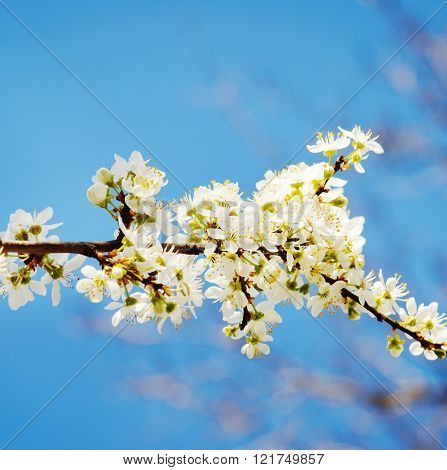 Photo Of Blossoming Tree Brunch
