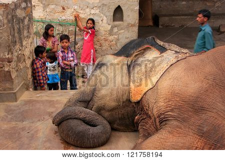 JAIPUR, INDIA - FEBRUARY 26: Unidentified kids watch lying elephant at a small elephant quarters on February 26, 2011 in Jaipur, India. Elephants are used for rides and other tourist activities in Jaipur.