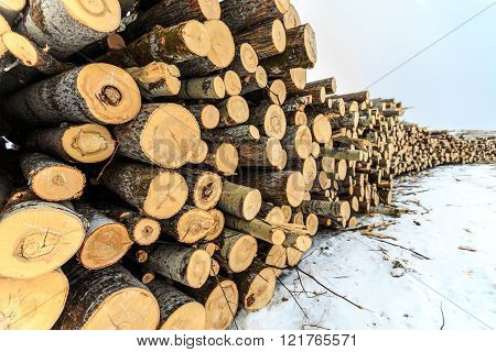 Logs Closeup, Pine Logs, Russian Winter