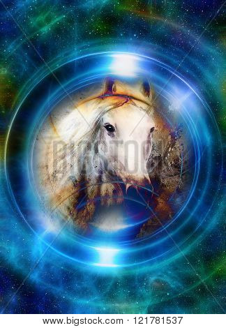 Horse in space, in circle light. Mirror on the planet Earth. Animal concept, Winter effect and blue color