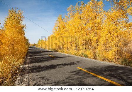 Innere Mongolei, China EJINAQI Populus euphratica