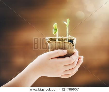 Little child cares for plants. Spring concept, nature and care.