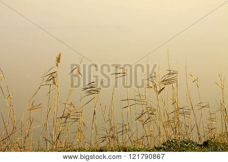 Dry autumn grass , close up