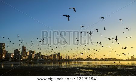 Durban Harbor With Birds Flying Over
