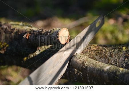 Man Cutting The Branch Of A Tree With A Saw. Spring Cleaning Of The Dry Branches And Aged. Selective