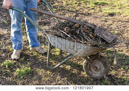 Man Carrying A Wheelbarrow In The Garden Filled With Branches Of Trees, Weeds And Pruned Plants