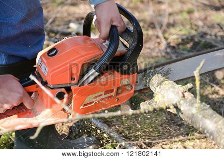 Man Cuts Tree With Chainsaw, Concept Of Deforestation. Selective Focus