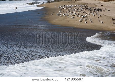 Seagulls at the beach.