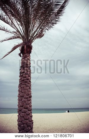 An Emirati couple sitting on the beach on a pleasant weather. A huge palm tree on the foreground.