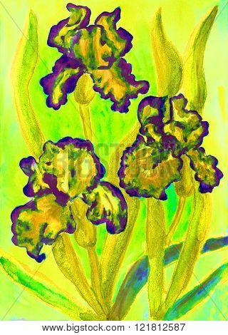 Three yellow irises on yellow background, watercolour painting