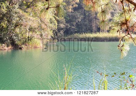 Pine trees and the lake landscape at the Lagunas de Montebello National Park Chiapas Mexico
