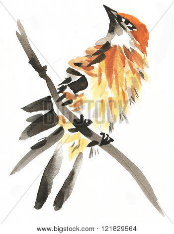 Stylish watercolor painting of white throat singing bird isolated on white background