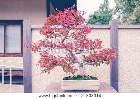 Crepe Myrtle bonzai tree with split toning retro filter