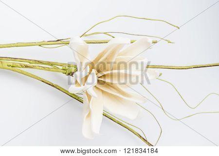 Elegant spring flower fake gardenia on white background. For wedding background image.
