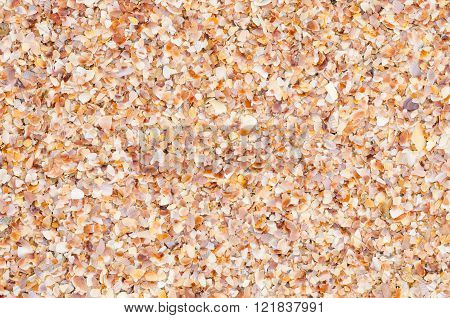close up background and texture of nature sea shell pattern on a sand beach in the summer