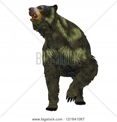 Arctodus or Short-faced Bear is an extinct mammal that lived in North America in the Pleistocene Age.