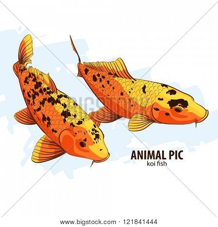 Orange Koi fishes