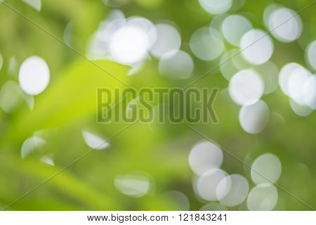 Abstract Blurred Green Tree With Light Spot Bokeh Background