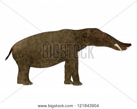 Platybelodon was a herbivorous extinct mammal related to the elephant that lived in Miocene Era in Africa, Europe, Asia and North America.