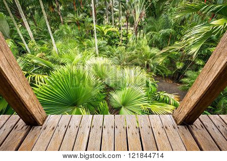 Wooden skywalk in palm tree garden for botany travel