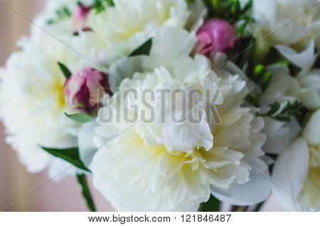 Beautiful White And Pink Peonies Abstract Background