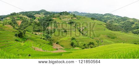 Beautiful green rice field terraced in Mu Cang Chai Vietnam