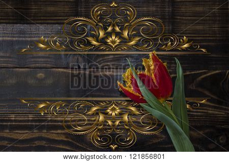 Red tulip with a yellow edging on dark wooden boards