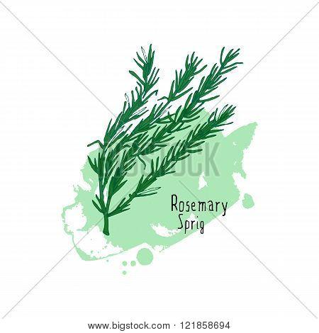 Vector green rosemary branch