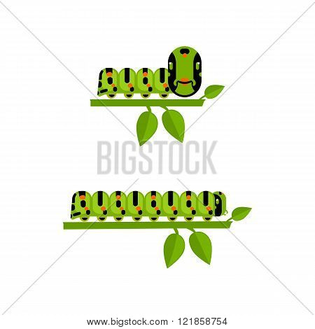 Young and big caterpillars set