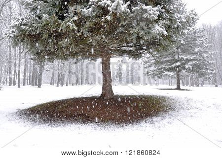 The Park Tree Falls On The First Snow
