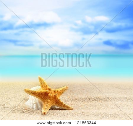 seashell and starfish on the sandy beach at ocean background