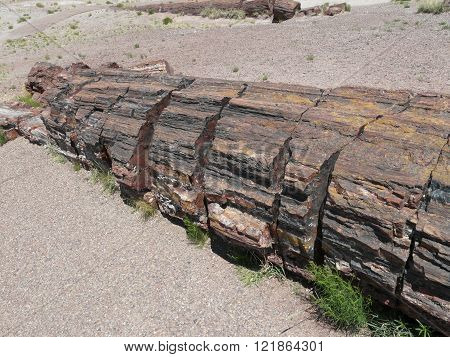 Trunk Of Petrified Tree In Petrified Forest National Park