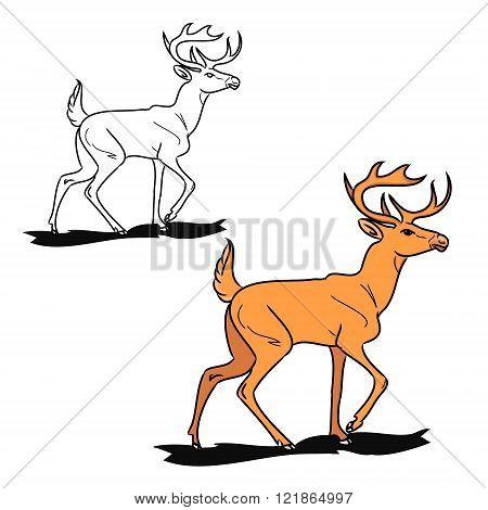 Forest Fallow Deer