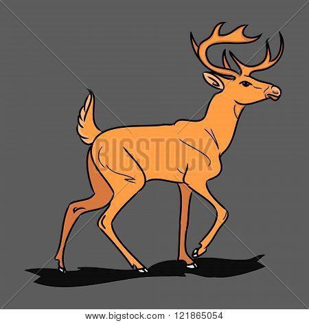 Forest Fallow Deer 0