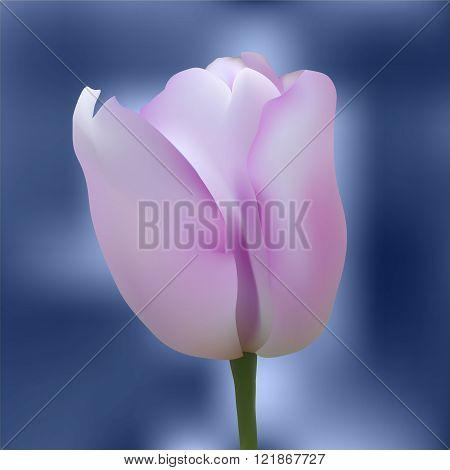 Realistic colorful tulip