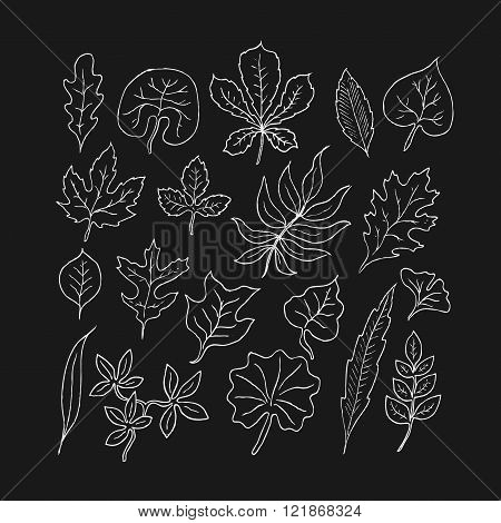 Hand-drawn leaves doodles set. White  silhouettes on black background.Isolated. Vector.