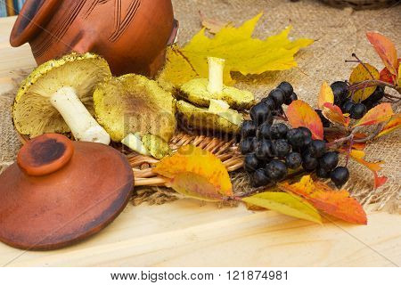 the photo shows the bouquet of yellow autumn leaves,mushrooms, and clusters of black berries of mountain ash