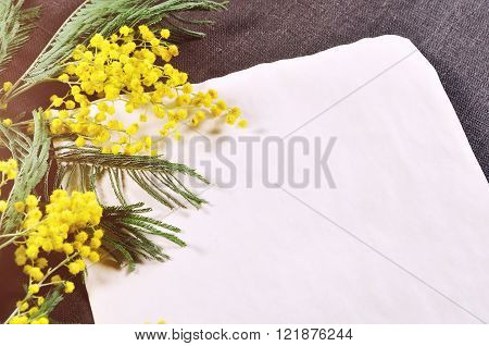 Old vintage paper sheet with free space for text near colorful yellow fluffy mimosa flowers lit by sunlight on the brown linen tablecloth. Spring background.