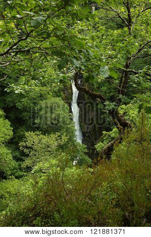 Distant waterfall glimpsed through trees. Taken near Devil's Bridge, Wales, UK.