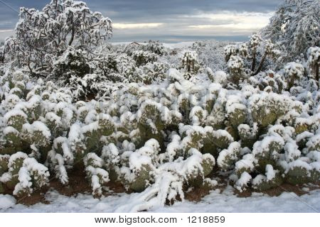 Snow-Covered Cactus