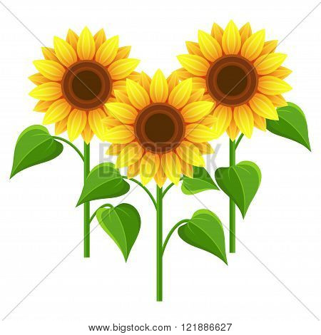 Beautiful nature background with three sunflowers. Stylized summer yellow flowers isolated on white background. Stylish floral wallpaper. Floral design elements. Vector illustration