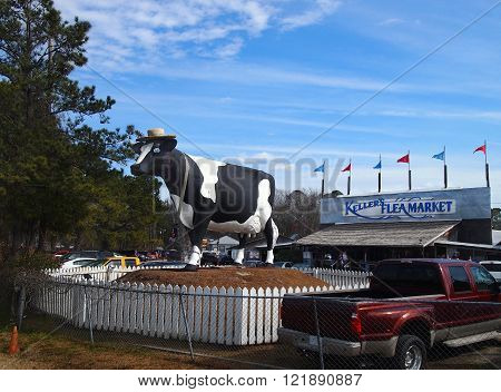 SAVANNAH GEORGIA - FEBRUARY 20 2016: A giant fiberglass cow sculpture formerly belonging to a Savannah area dairy decades ago now stands in front of Keller's Flea Market on the outskirts of Savannah GA.