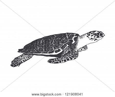 Vector illustration. large sea turtle. Black on white