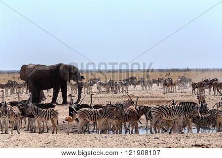 Crowded Waterhole With Elephants