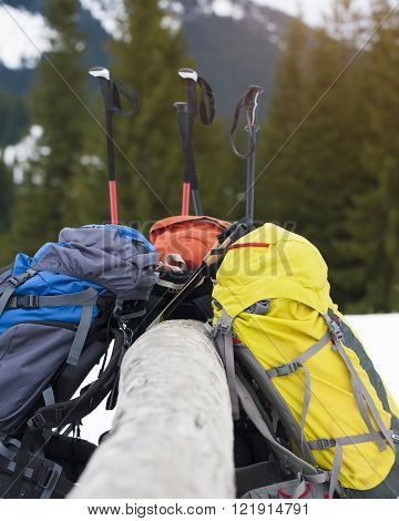 Large backpacks for Hiking and walking sticks stand near a tree.