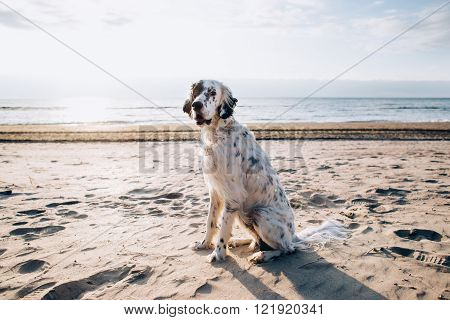 dog sitting on the beach by the ocean on a sunny day