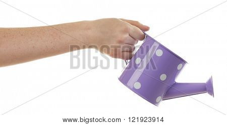 Female hand holding a small polka-dot purple watering can with spout isolated on white background
