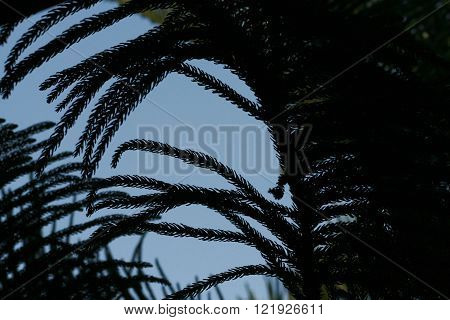 Ferns with blue sky with silhouette technique