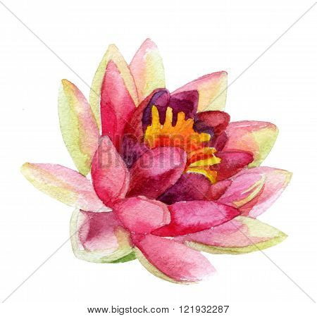 Hand painted lotus flower isolated on white background. watercolor illustration